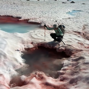 Dr. Kodner surveying snow algae on the White Chuck Glacier on the flanks of Glacier Peak in the Washington Cascades.
